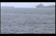 Circe identifica cuatro especies de cetáceos en aguas de la bahía de Algeciras