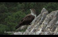 Turismo promocionará el Birding Algeciras en diferentes foros especializados
