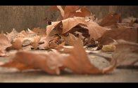 Hoy 22 de septiembre celebramos el primer día del otoño