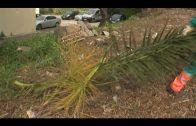 Parques y Jardines continúa con el plan de desbroce de parcelas municipales