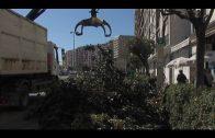 Parques y Jardines poda los árboles de la avenida Virgen del Carmen