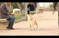 La Policía Local comienza una campaña contra la no recogida de las heces de perros en vía pública