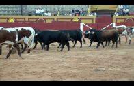 Cita con los toros en Las Palomas