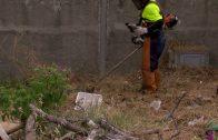 El Ayuntamiento de Algeciras sigue con los trabajos de limpieza en la Cañada de los Tomates