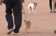 Nueva campaña para la recogida de heces de animales de la vía pública