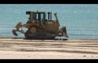 El PSOE asegura que la nefasta gestión de las playas impide el baño ante la presencia de medusas