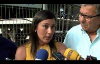 El PSOE solicita  al alcalde de Algeciras que no mienta más sobre la Algeciras – Bobadilla