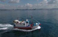 """Los Armadores algecireños afectados por la """"alga parda"""" piden ayuda a las administraciones"""