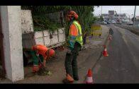 El Ayuntamiento comienza un plan de poda de árboles en los barrios de la ciudad