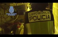 La Policía Nacional desmantela una plantación de marihuana y detiene a un vecino de Algeciras