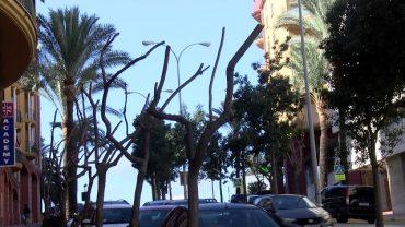 Parques y Jardines poda las palmeras del paso del Río de la Miel