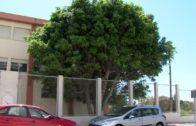 El Ayuntamiento poda las palmeras del IES Bahía de Algeciras a petición de la Junta