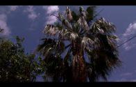 Parques y Jardines lleva a cabo una campaña de fumigación de palmeras en la Plaza Alta