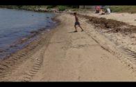 Landaluce pedirá en el Senado medidas para frenar al alga invasora