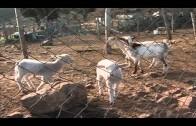 El BOP publica la convocatoria para adjudicar el aprovechamiento forestal de  Algamasilla
