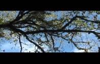 IU registra varias iniciativas sobre las medidas de conservación del Bosque de Nieblas