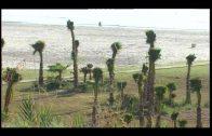 El PSOE reclama la limpieza de la playa de la Concha