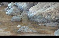 ASSP pide conocer los daños provocados por el vertido de crudo en el litoral algecireño