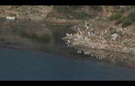 ASSP pide información sobre la legalidad de una nueva escombrera detectada en Las Pilas