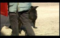 La Guardia Civil interviene más de 40 kilos de hachís en un camión en el puerto de Algeciras