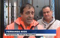 Ayuntamiento aprobará en próximo pleno la reclasificación de categoría de la plantilla de Recolte