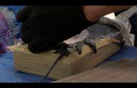 Intervenidos 118 kilos de cocaína en el Puerto de Algeciras