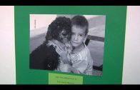 Juventud lanza el segundo concurso fotográfico para recaudar fondos para la Protectora de Animales