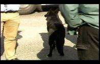 La Guardia Civil interviene 50 kilos de hachís en dobles fondos realizados en un vehículo