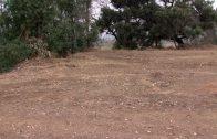 Continúan los trabajos de limpieza y desbroce en la zona del Acebuchal