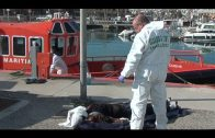 Pro Derechos Humanos Andalucía cifra en 6.000 las muertes confirmadas en el Estrecho en 20 años