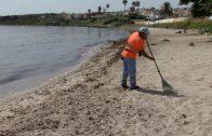 El Grupo Municipal Socialista denuncia el abandono de la playa del Chinarral