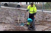 El Ayuntamiento limpia y desbroza la calle Oporto en San José Artesano