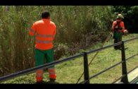 Parques y Jardines desbroza el acceso a la Playa de la Concha
