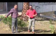 Vecinos del Saladillo reciben material municipal para adecentar la zona