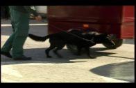 La Guardia Civil aprehende 78 kilos de hachís en dos vehículos en el Puerto