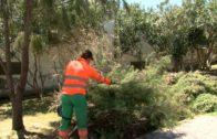 La Delegación de Limpieza continua con la limpieza y desbroce en el barrio de El Saladillo.