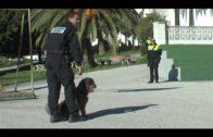 Los ayuntamientos de Algeciras y San Roque colaboran en seguridad a través de la Policía Local
