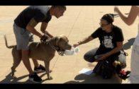 El 30 de septieembre se celebra la V Canminata en beneficio de la Protectora de Animales