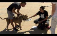 Este domingo se celebra la V Canminata en beneficio de la Protectora de Animales