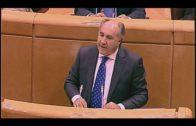 Landaluce informa sobre las iniciativas parlamentarias del Pp en el Senado