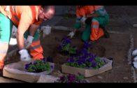 Algesa trabaja en el entorno de los cementerios de cara al Día de los Difuntos