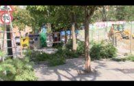 Parques y Jardines poda árboles para evitar riesgos ante la posibilidad de mal tiempo