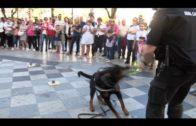 La academia de Policía Local impartirá un curso de guías caninos y perros detectores de drogas