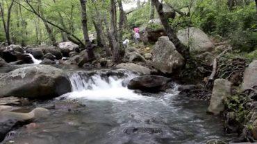 Parques y Jardines poda las palmeras del paseo del Río de la Miel