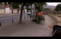 Algesa lleva a cabo las trabajos de desbroce del talud de la autovía A-7