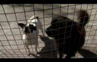 Cs propone que el Ayuntamiento organice un evento para fomentar la adopción de animales