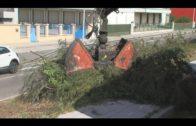 Continúan las limpiezas de choque y la sustitución de contenedore en barriadas de la ciudad