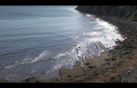 El Ayuntamiento de Algeciras sigue con la retirada periódica de las algas que llegan a las playas