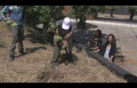 La ciudad conmemora el Día de los Parques con una plantación en el Parque del Centenario