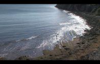 Tarifa acoge  unas jornadas sobre la alga invasora en la que participan administraciones y afectados